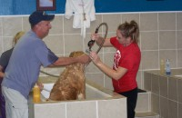 Hendersonville Dog Grooming - DIY - Do It Yourself - Dog Wash