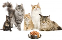 hendersonville-cat-food-supplies